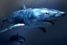 德州扑克从鱼到鲨鱼的进化-蜗牛扑克官方-GG扑克