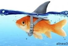 德州扑克中的鱼、鲨鱼、鲸鱼是什么意思-蜗牛扑克官方-GG扑克